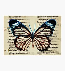 Northumberland Butterfly Photographic Print