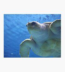 Lámina fotográfica Mister Turtle Is My Father