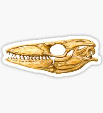 Mosasaur Skull Sticker