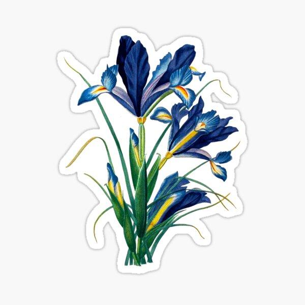Vintage - Flower - TIR - Blue Iris Sticker