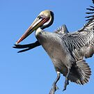 Coming in for a Landing by Barbara  Brown