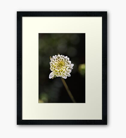 Dahlia Love Framed Print