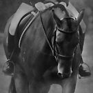 Halt - Black and White Horse Photograph by Michelle Wrighton