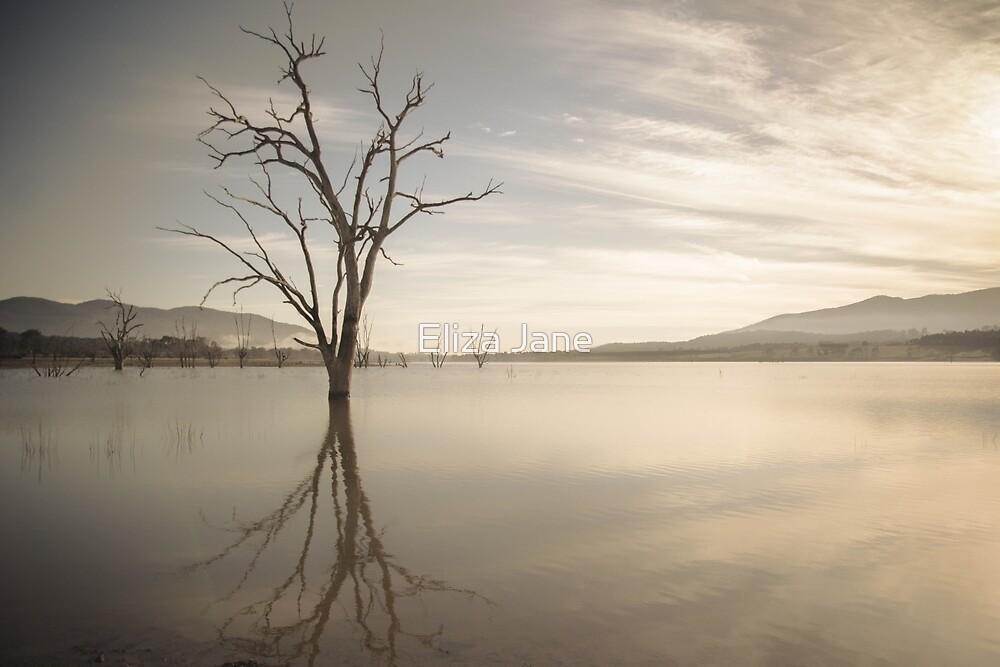 Lake of trees by Eliza Jane