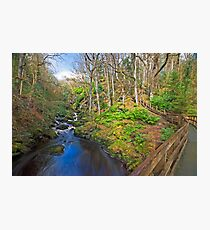 Ness Woods River Photographic Print
