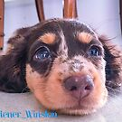 Winston the Wonder Dog by Alison Hill
