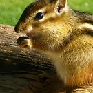 Chipmunk Case by cinn
