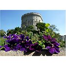Castle Clematis by CiaoBella