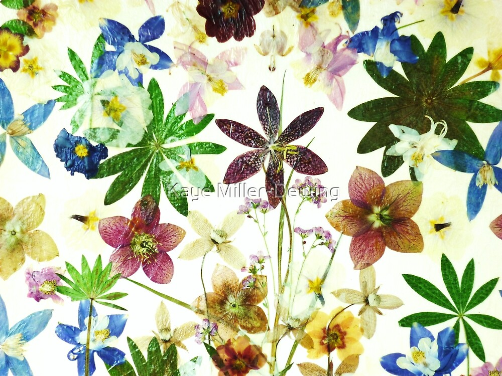 Floral May 2 by Kaye Miller-Dewing
