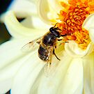 Bee on a Dahlia flower. by Billlee