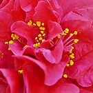 Pink and Yellow by Scott Mitchell