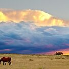 Horses On The Storm by Bo Insogna