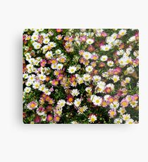 Candy Coloured Daisies Metal Print