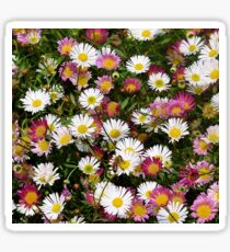 Candy Coloured Daisies Sticker