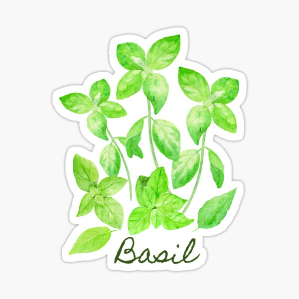Watercolor Basil Illustration Sticker