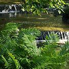 Listen to the Babbling Brook - Green Summer Zen by Georgia Mizuleva