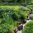 The Green Magic of Summer - Miniature Brook in the Garden by Georgia Mizuleva