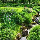 The Green Magic of Summer - a Luscious Garden by Georgia Mizuleva