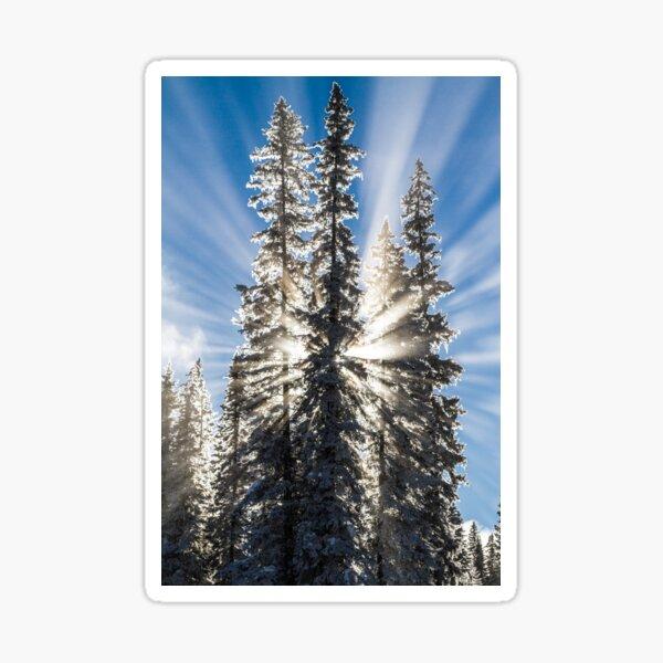 Winter Sunbeams Sticker