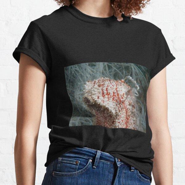 Spawning Sea Cucumber, Kapalai, Malaysia Classic T-Shirt