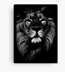 lion, indian lion Canvas Print
