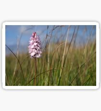 Spotted Orchid,  Portnoo, Co. Donegal Sticker