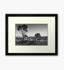 Black and White Woody Framed Print