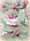 Tulip Tree Blossoms - Liriodendron tulipifera by MotherNature