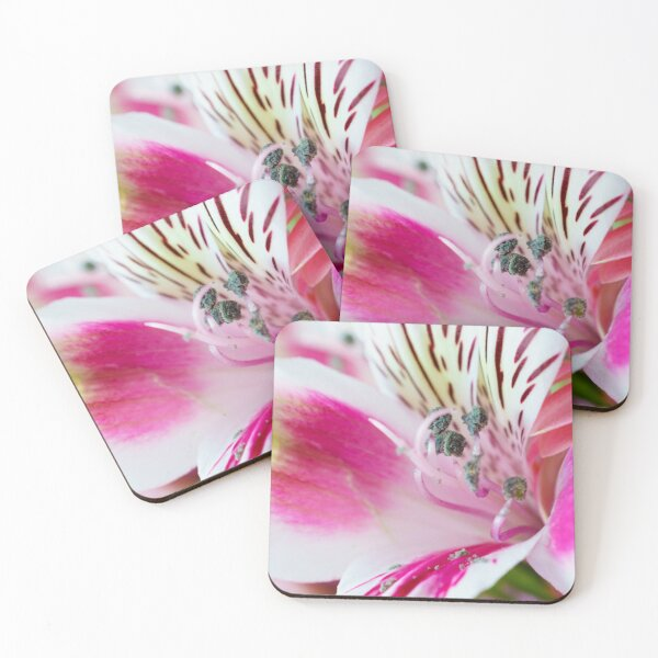 Bright, White and Pink Coasters (Set of 4)