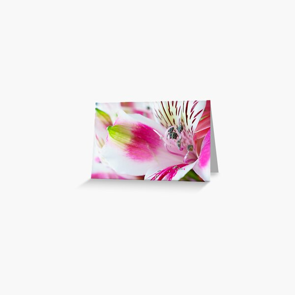 Bright, White and Pink Greeting Card