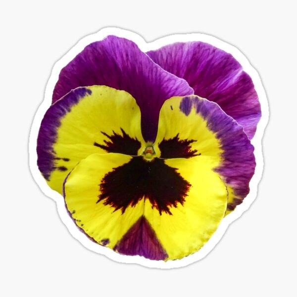 Yellow and Purple Pansy Sticker