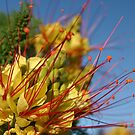 Yellow Mexican Bird of Paradise by MaryVailMBA