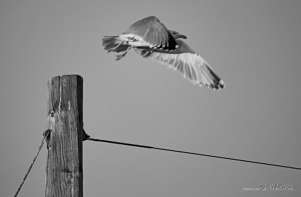 Seagull Taking Off | Cutchogue, New York by © Sophie W. Smith