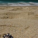 Black tipped sea shell on the beach by MaryVailMBA