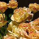 Dirty Yellow Roses by MaryVailMBA