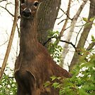One Curious Deer by Veronica Schultz