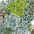 Succulent Obsession by DianneWhite