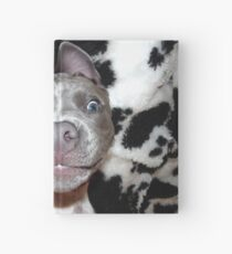 Silly, Baby, Blue Pit Bull Puppy Dog  Hardcover Journal