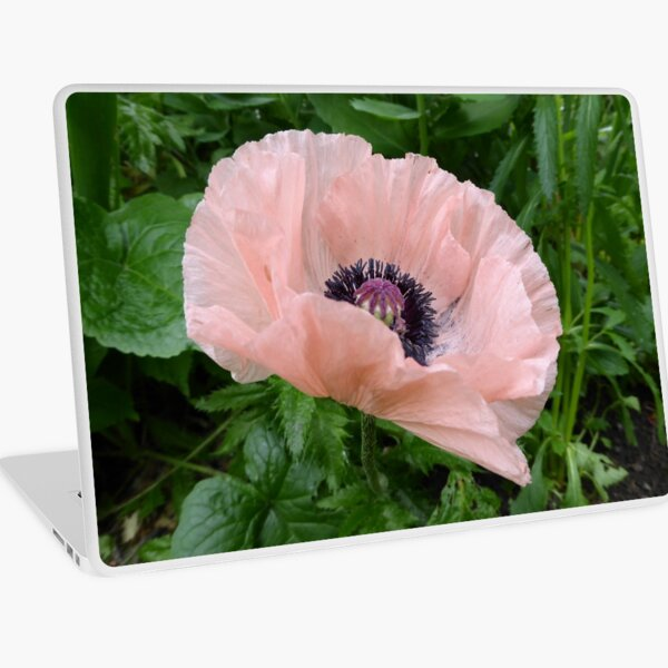 Oriental Poppy Laptop Skin