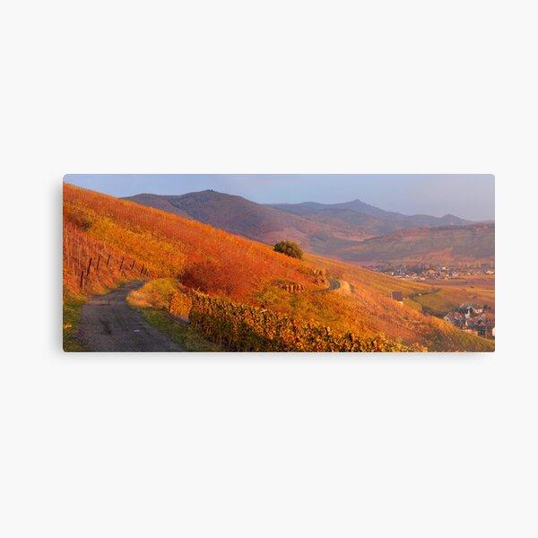 Vignoble de Katzenthal et les vosges en automne Impression métallique