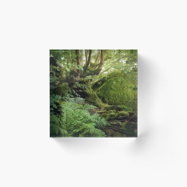 Green leaves and moss Acrylic Block