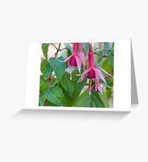 purple flower fuchsia Greeting Card