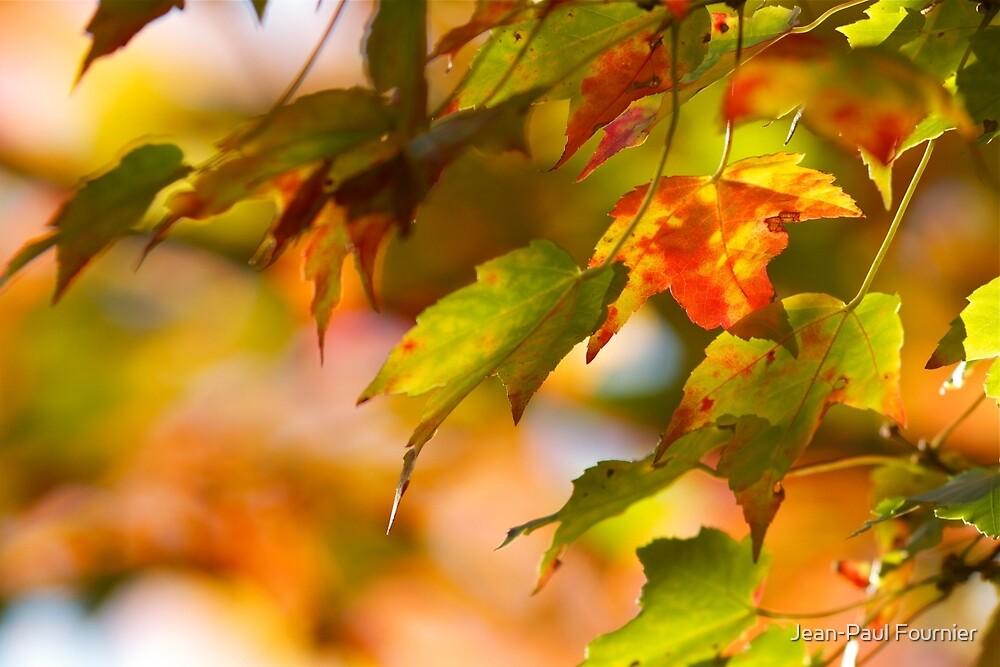 Fall in Navan by Jean-Paul Fournier