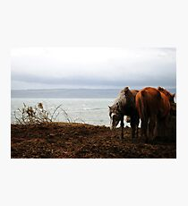 Wild horses in Donegal, Ireland Photographic Print