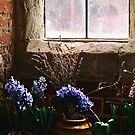 HYACINTHS IN A WINDOW by Michael Carter