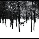 Spirit Pony in the Mist by Wayne King
