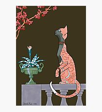 Carmen, Art Deco Cat Photographic Print