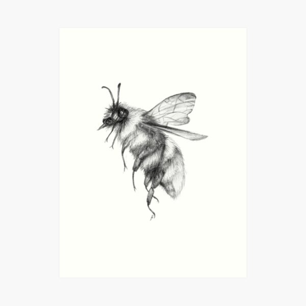 Bumblebee Sketch Art Print