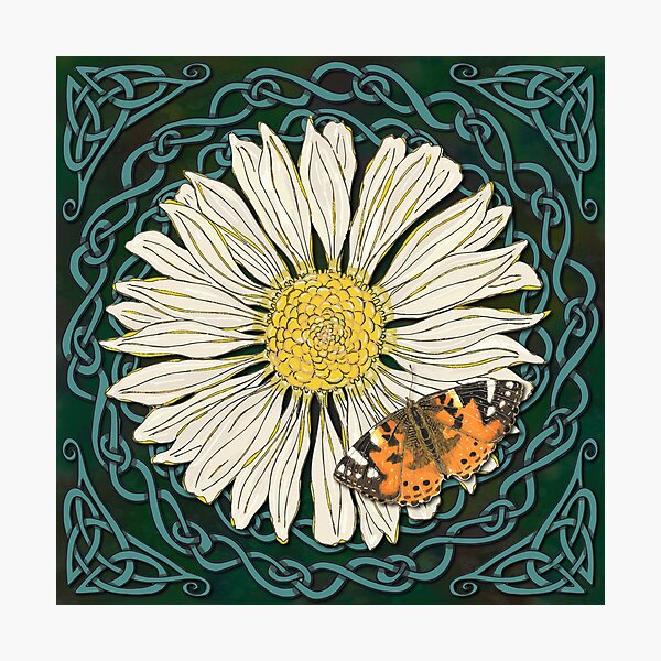 Celtic Daisy and Painted Lady Butterfly Photographic Print