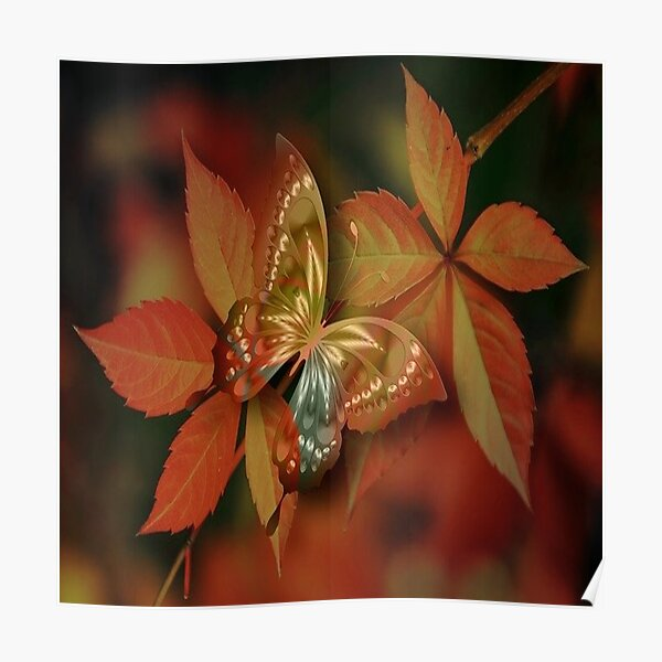 Beautiful Butterfly. Poster